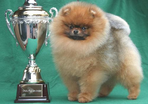 Breed Winner of the year
